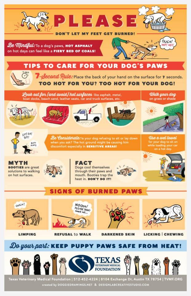 dog burning paws infographic illustration poster