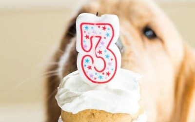 Posh Paws Dog Grooming & Spa is 3 years old!